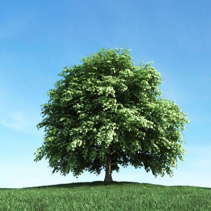 tree 40 AM106 Archmodels