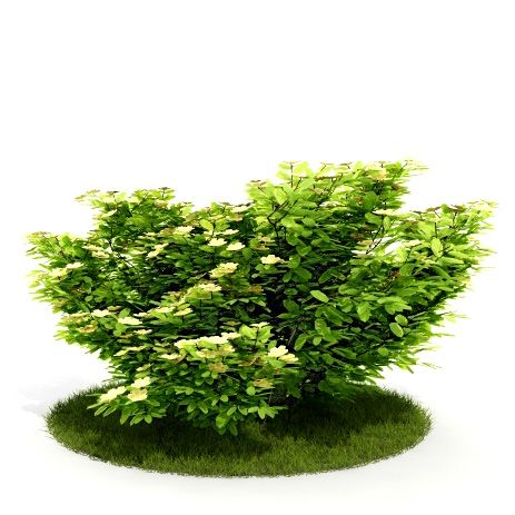 Plant 26 AM52 for Cinema4D Archmodels