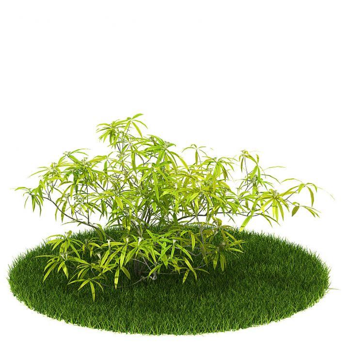 Plant 52 AM42