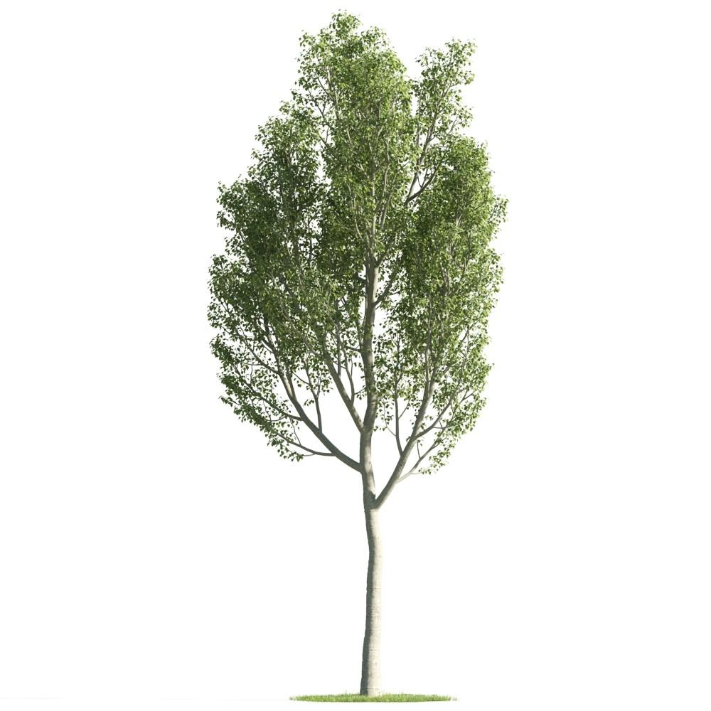 Tree 30 AM176 Archmodels