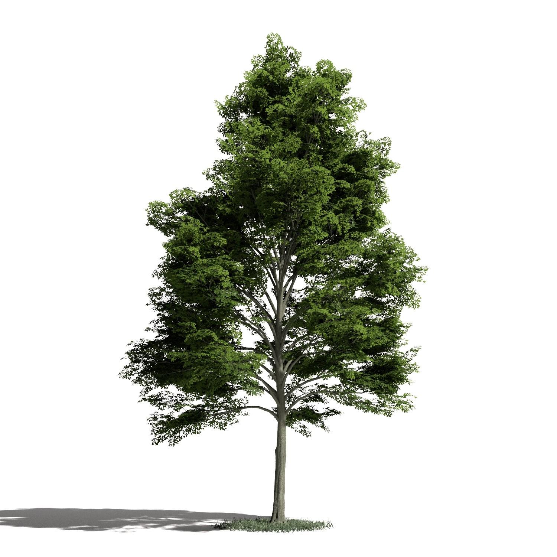 Tree 13 amb1