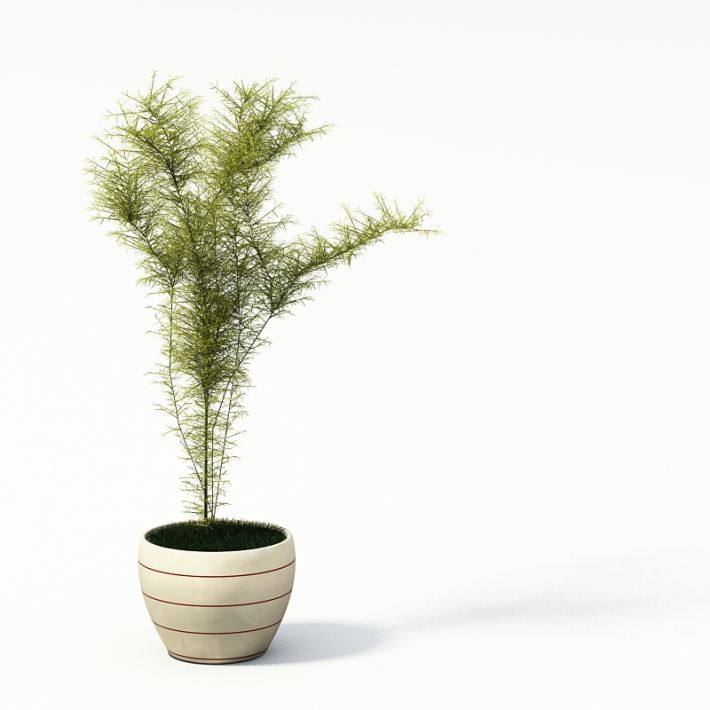 Plant 28 AM24