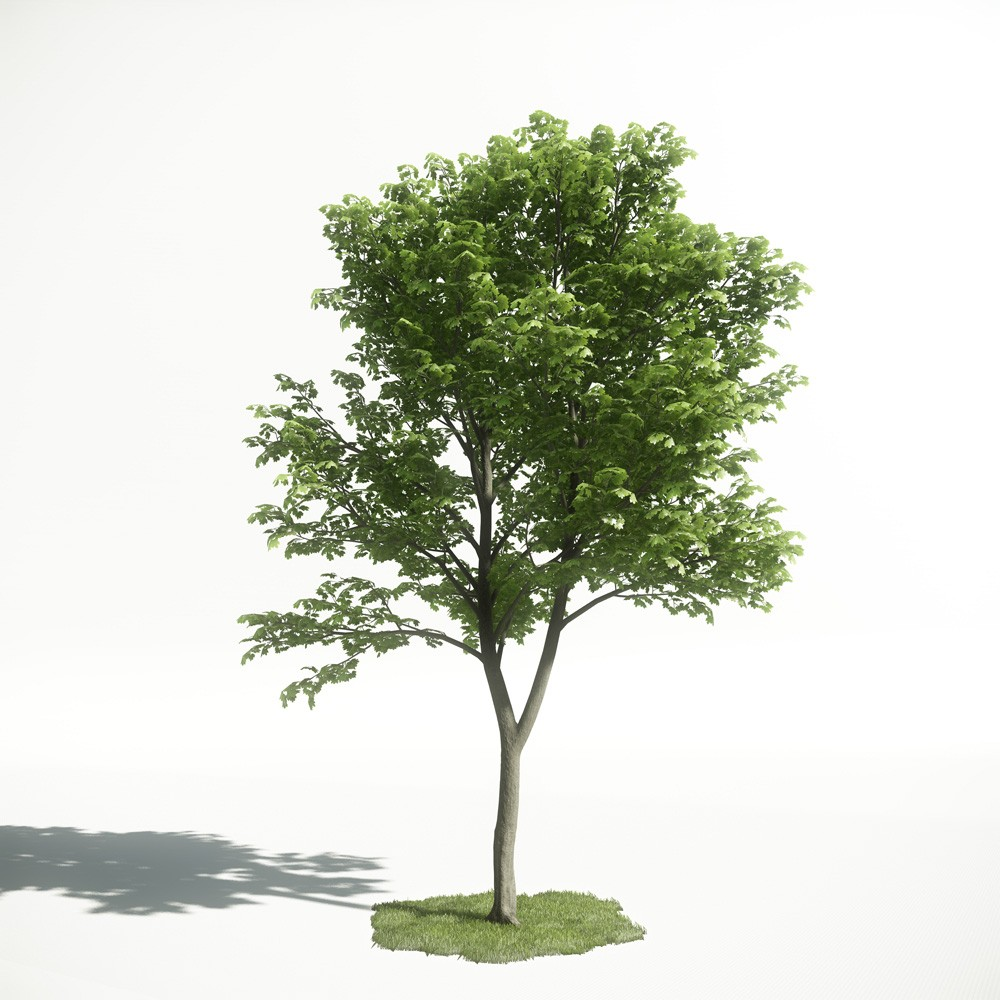 Tree 24 AM1 for CryEngine Archmodels