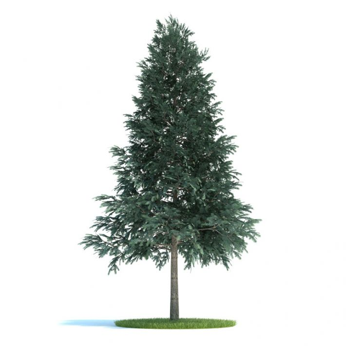 Picea abies Plant 50 AM58 Archmodels