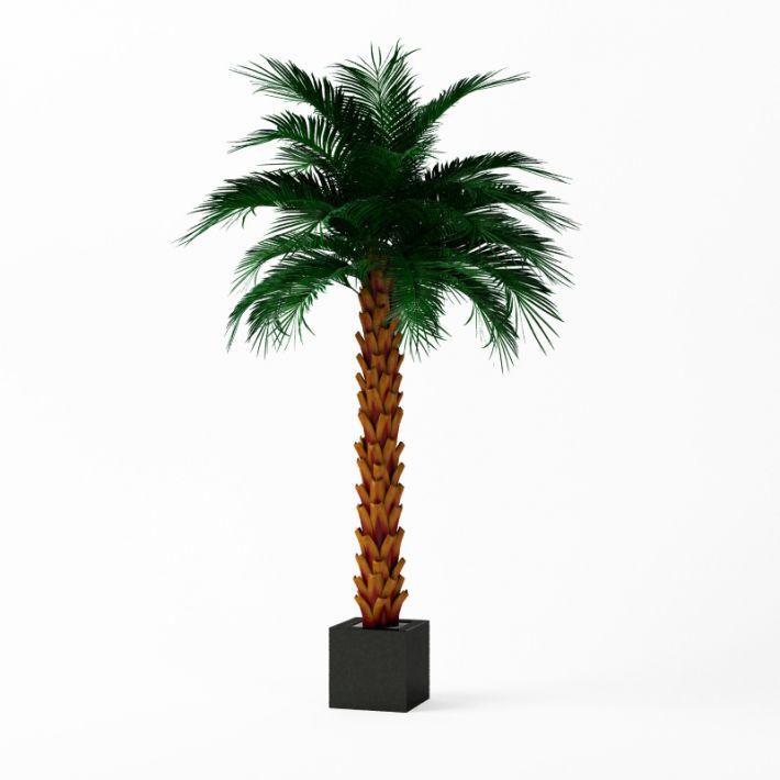 Plant 27 AM75