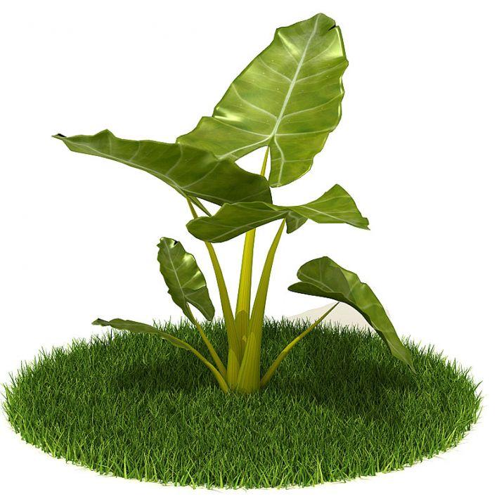 Plant 35 AM42 Archmodels