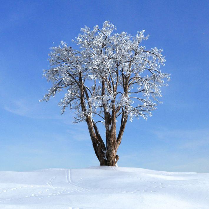 lilac tree 30 AM100 Archmodels