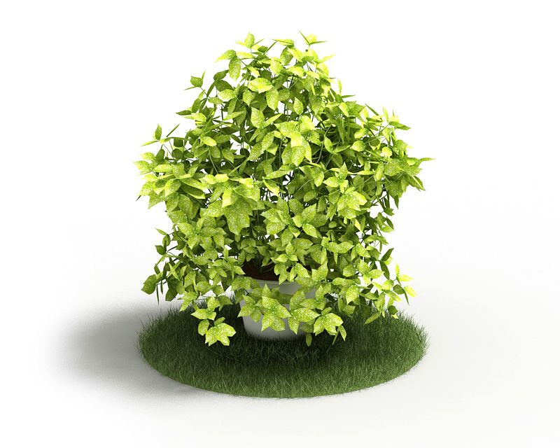 Plant 51 AM4 for Cinema4D Archmodels