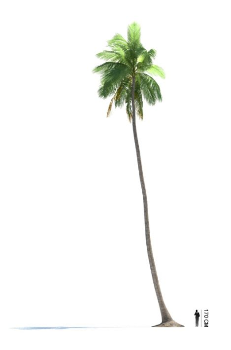 Cocos nucifera 18 AM85 Archmodels