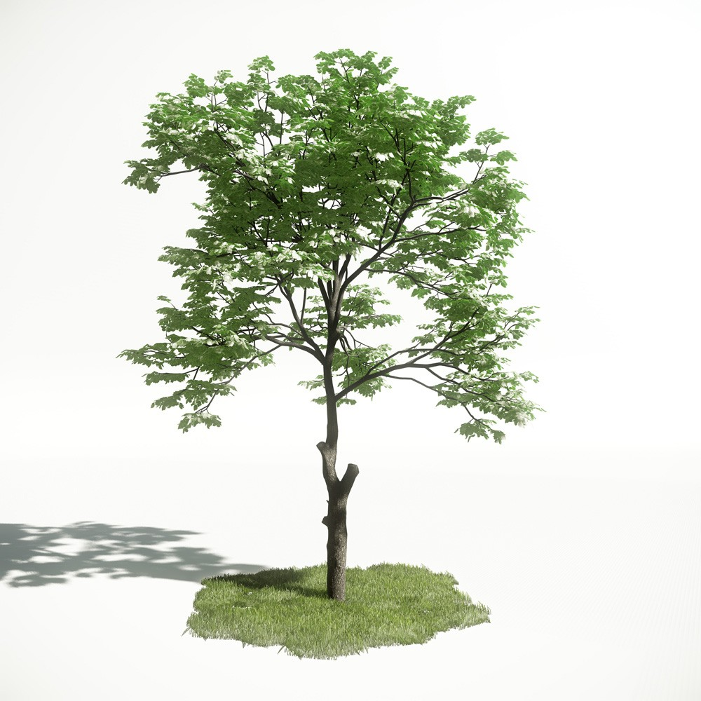 Tree 8 AM1 for CryEngine Archmodels