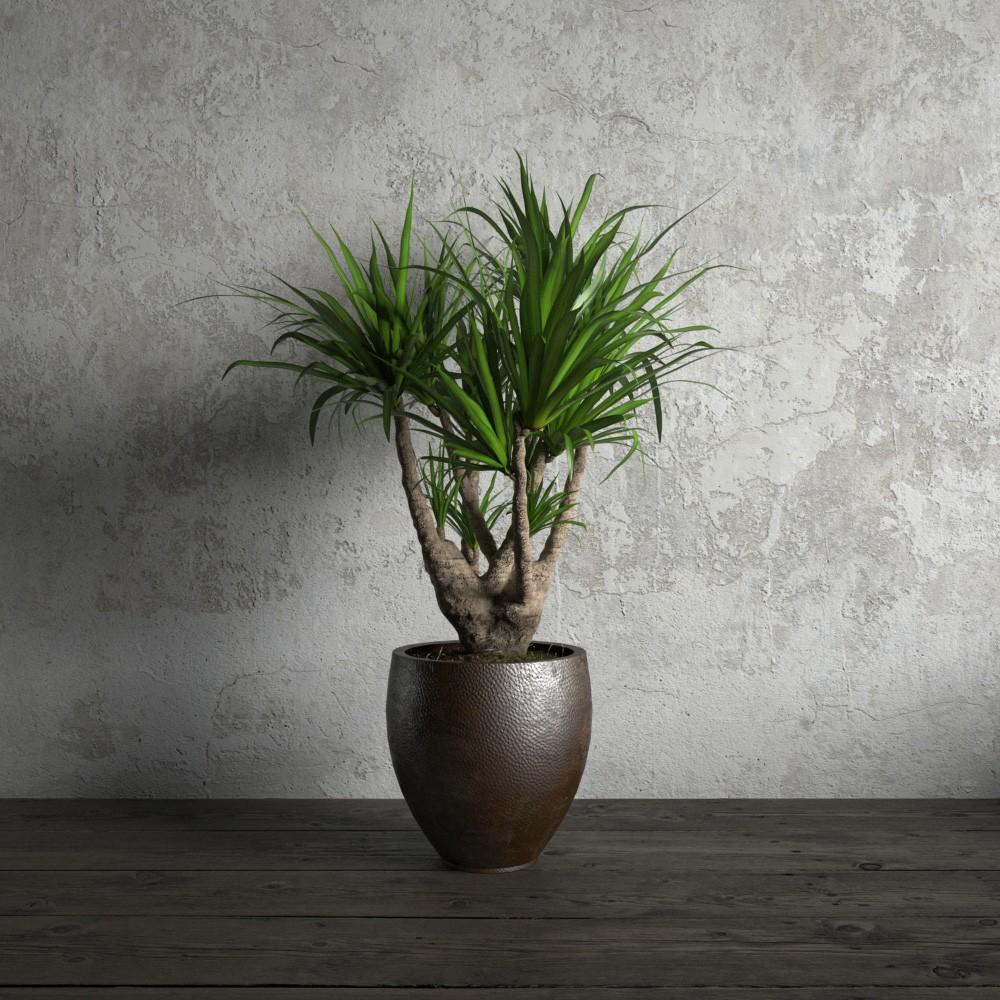 plant 18 AM173 Archmodels