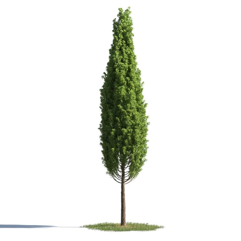 tree 24 AMC1