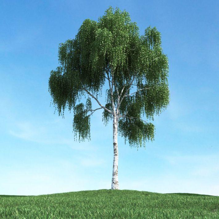 tree 20 am106