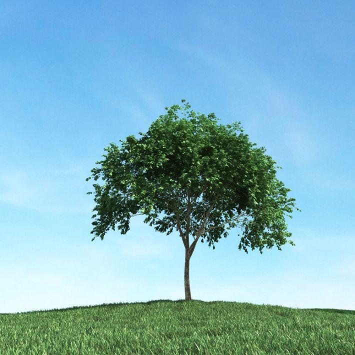 tree 34 AM106 Archmodels