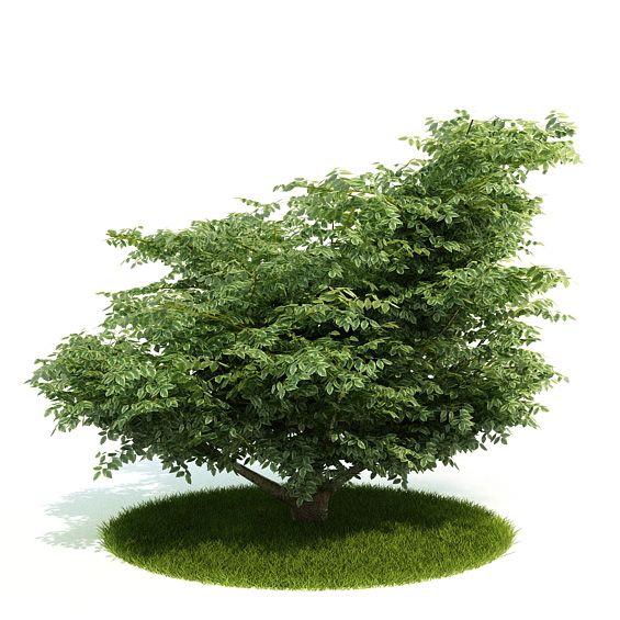 Plant 8 AM52 Archmodels