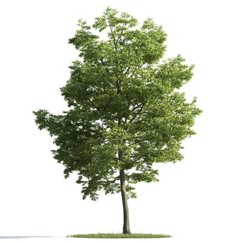 tree 24 am163