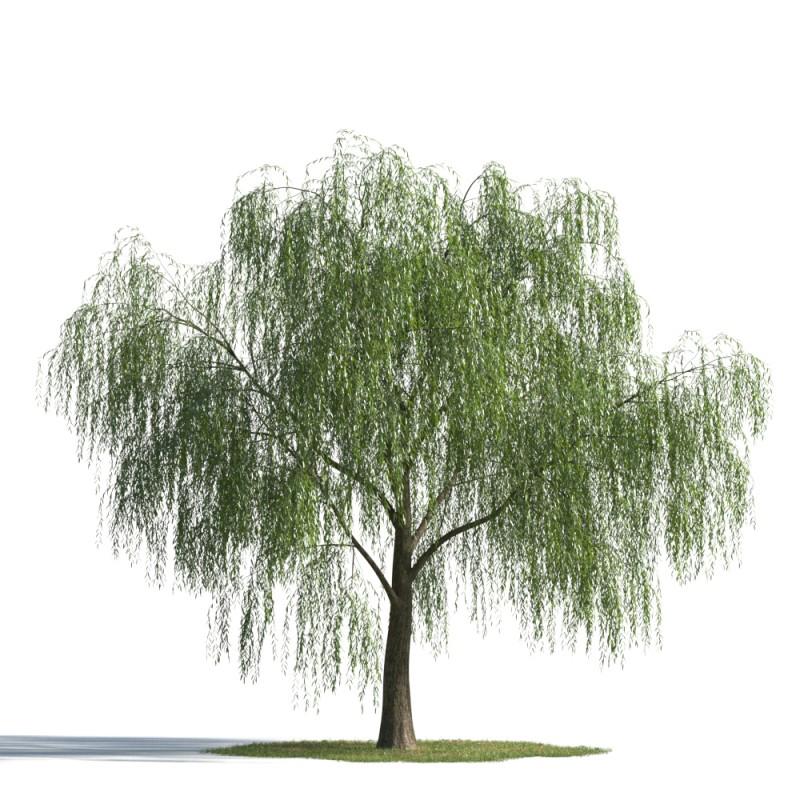 tree 43 AMC1
