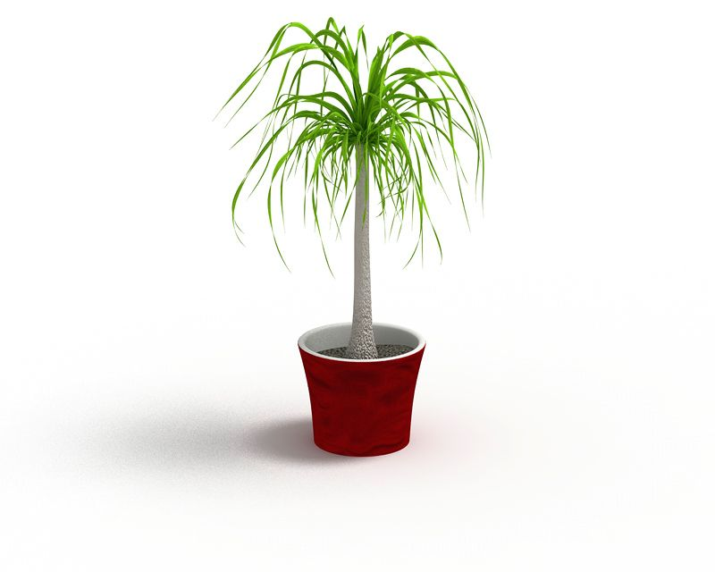 Plant 50 AM4 for Cinema4D Archmodels
