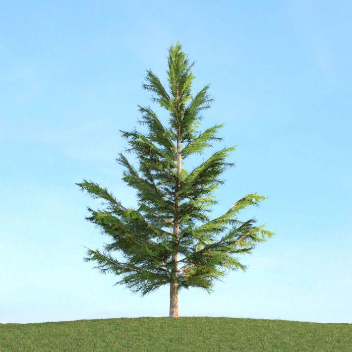 Picea 41 AM113 Archmodels