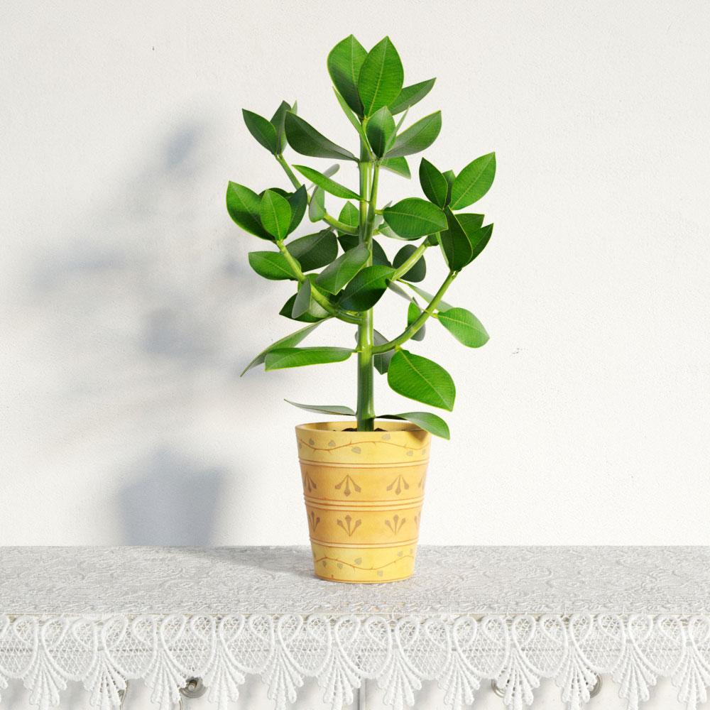 plant 43 am141