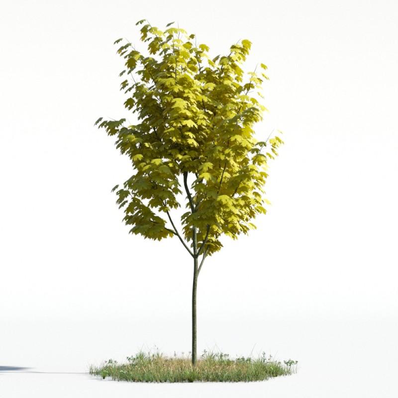 tree 52 AMC1