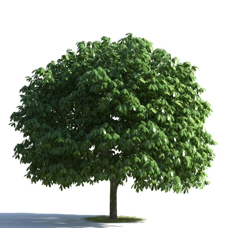 tree 30 AMC1