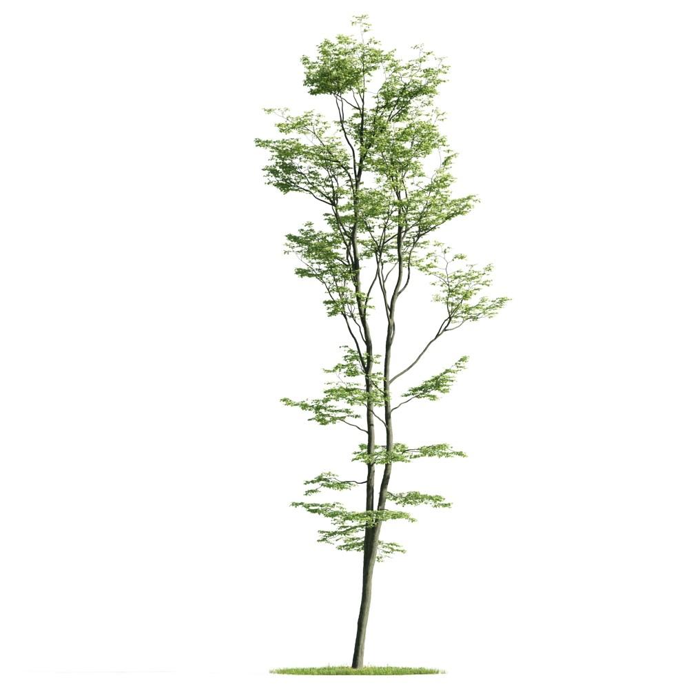 Tree 35 am176
