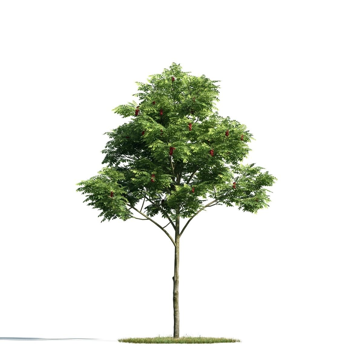 Tree 03 am171