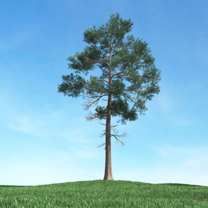 tree 17 AM117 Archmodels