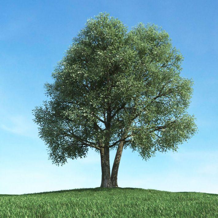 tree 49 AM117 Archmodels
