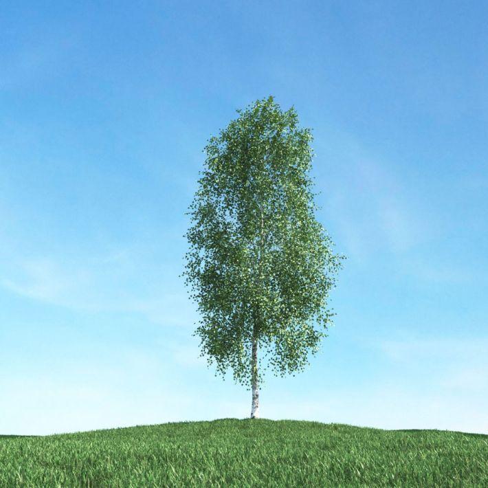 tree 7 AM106 Archmodels
