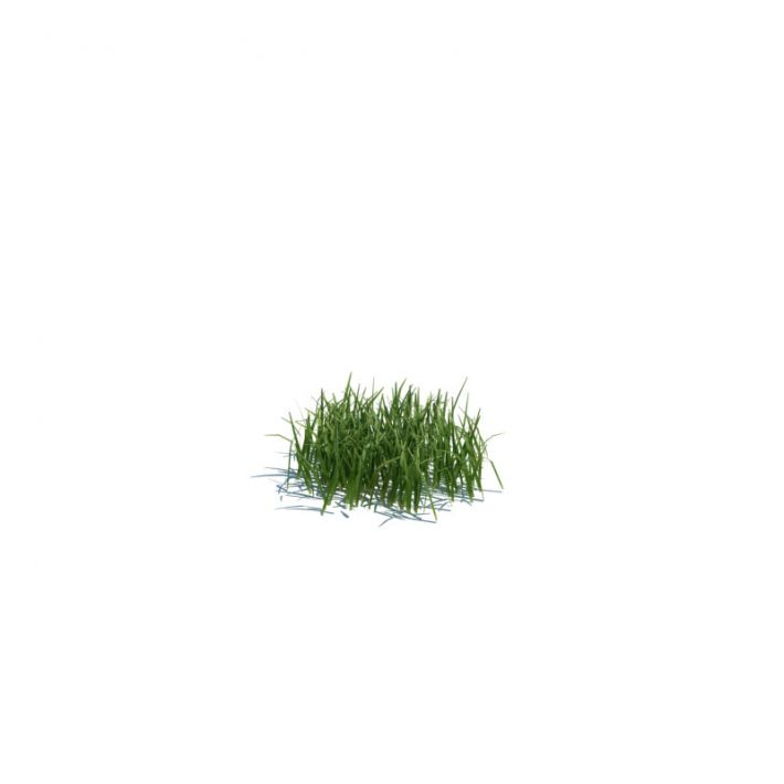 simple grass small 103 am124