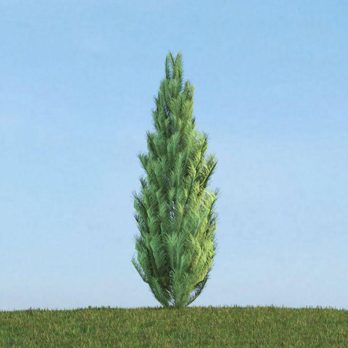 Pinus 37 AM113 Archmodels