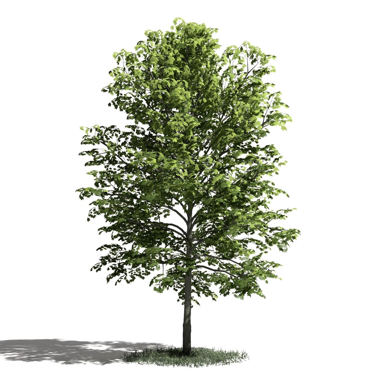 Tree 23 amb1