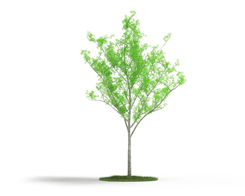 Plant 9 AM4 for Cinema4D Archmodels