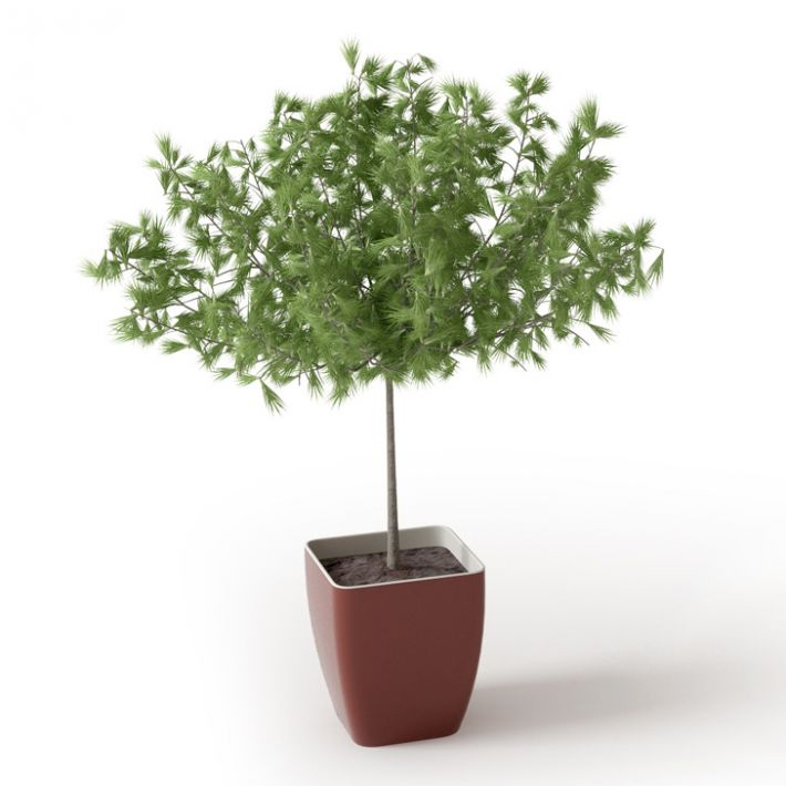 Plant 63 Archmodels vol. 66