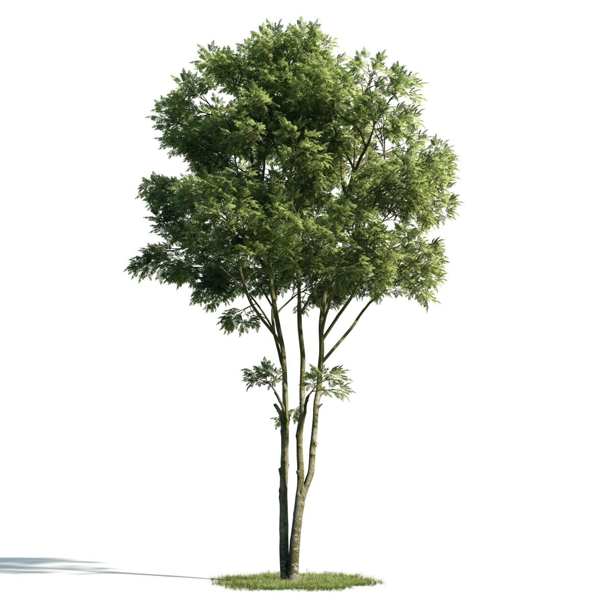 Tree 1 AM171 Archmodels