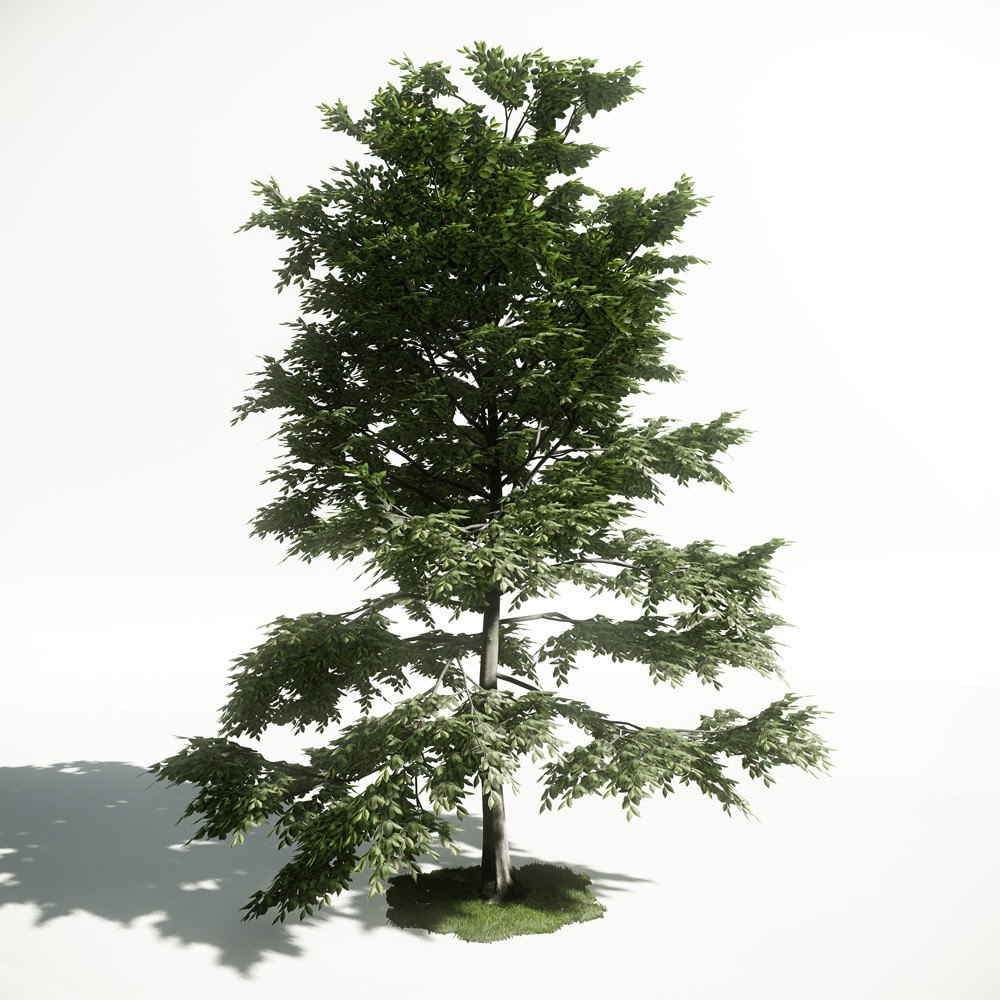 Tree 10 AM1 for CryEngine Archmodels