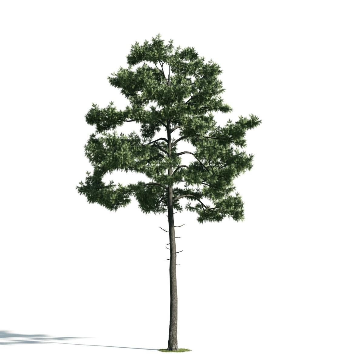 Tree 35 AM171 Archmodels