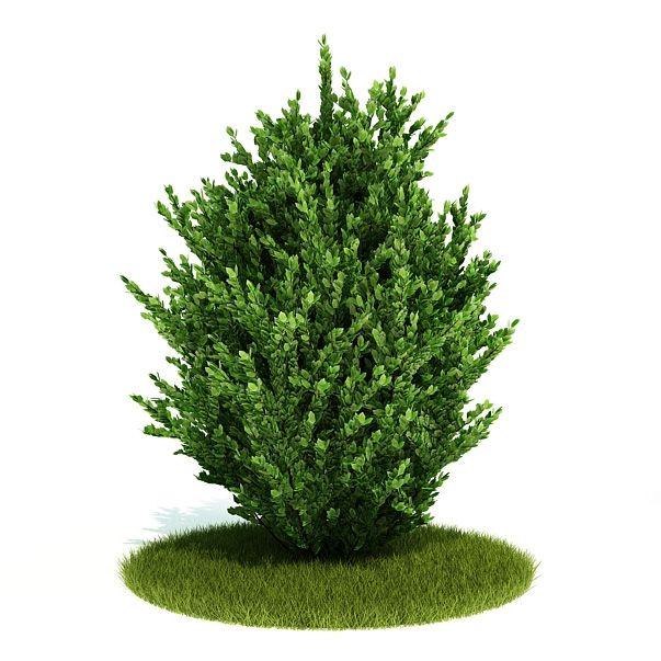 Plant 06 AM52