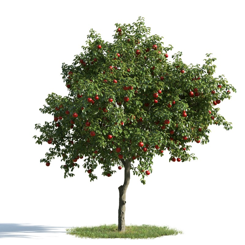 tree 09 am163