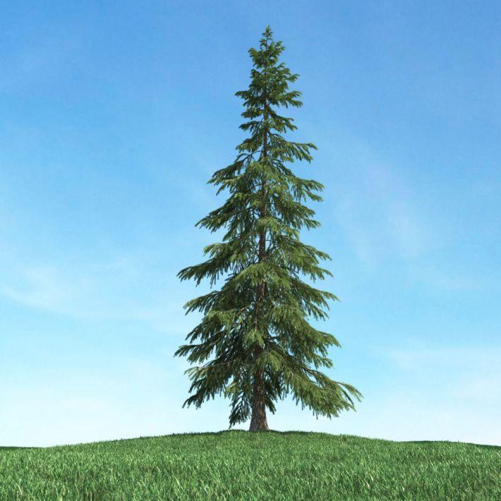 tree 3 AM117 Archmodels