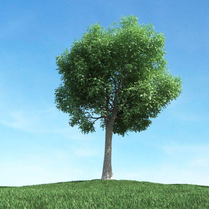 tree 46 AM106 Archmodels