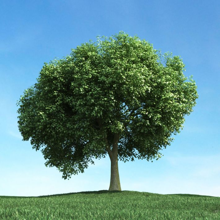 tree 45 AM106 Archmodels