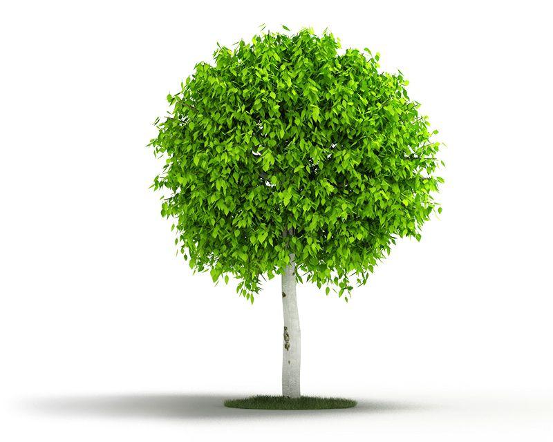 Plant 17 AM04 C4D