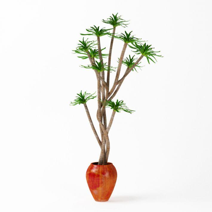 Plant 21 AM75 Archmodels