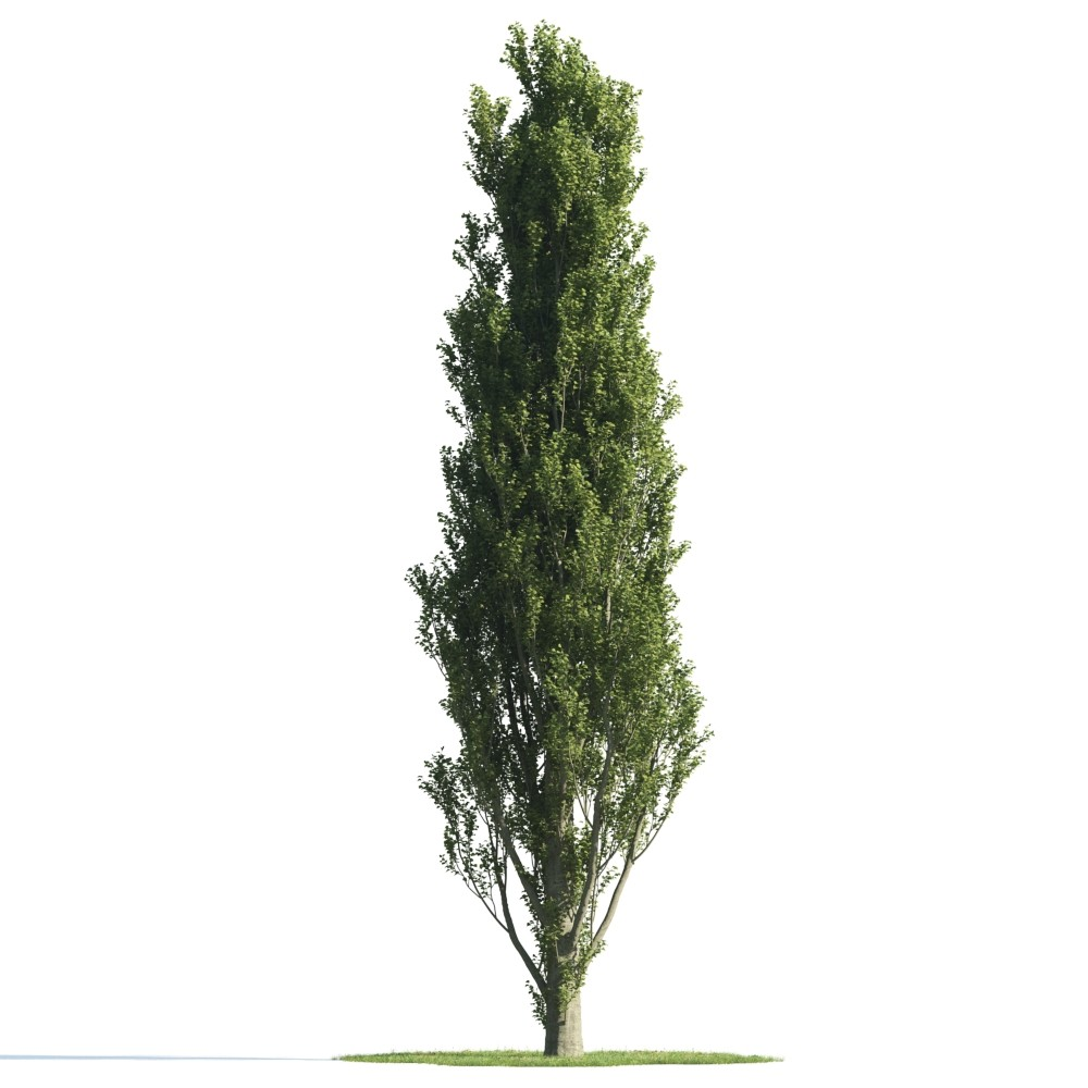 Tree 24 AM176 Archmodels