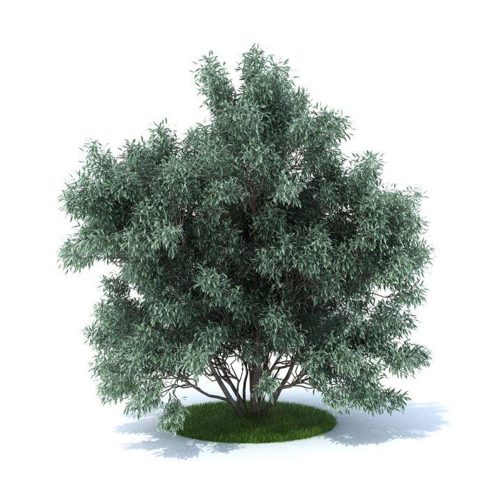plant 33 am105