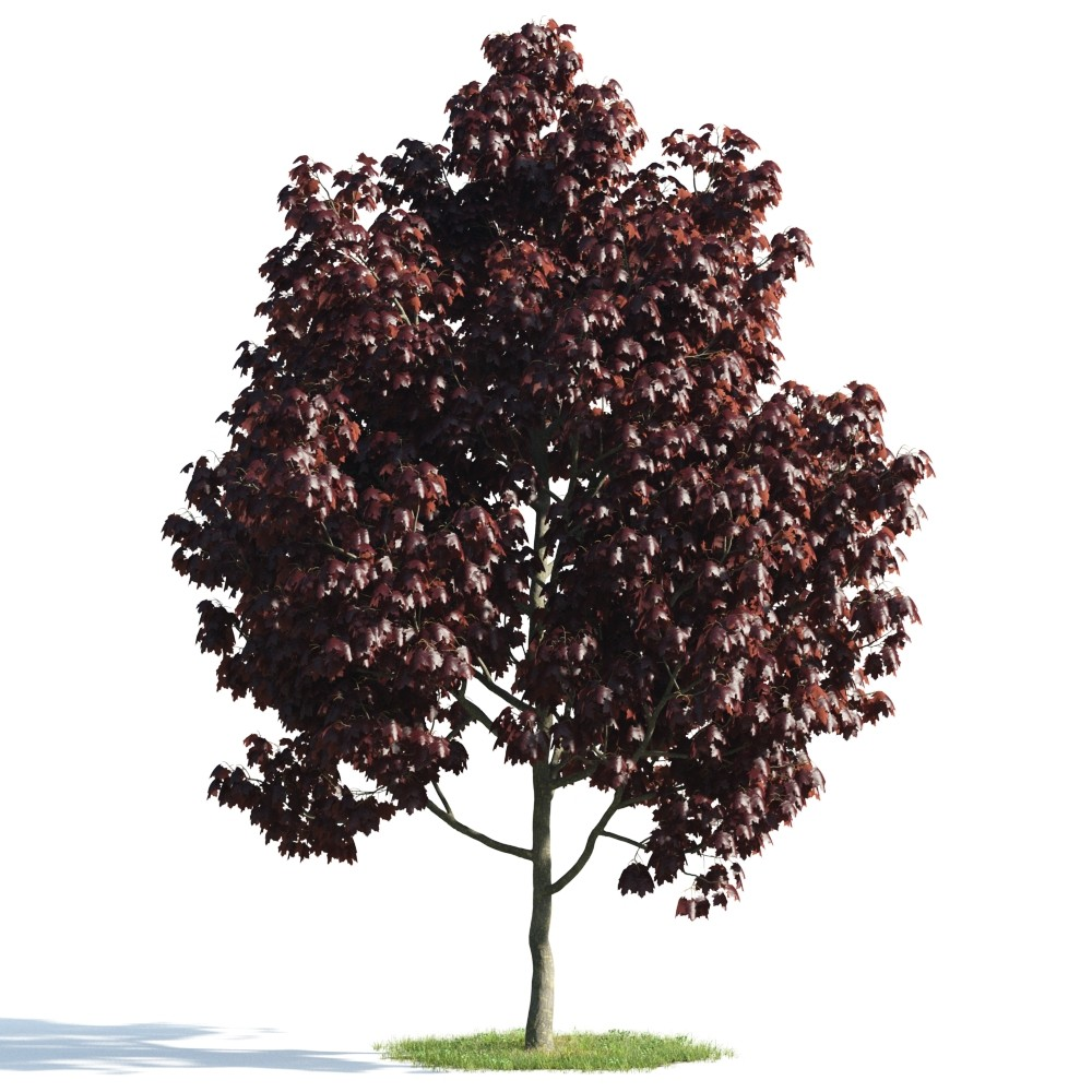 Tree 20 am176