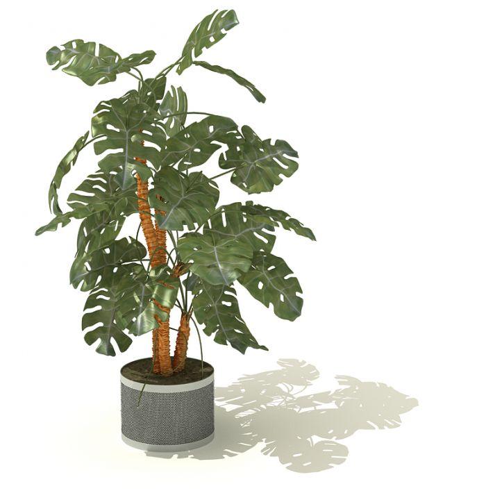 plant 17 AM41 Archmodels